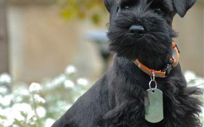 Câinele-ninja