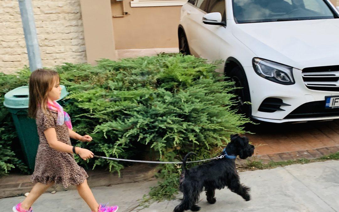 Poate funcționa relația dintre un bebeluș și un câine?