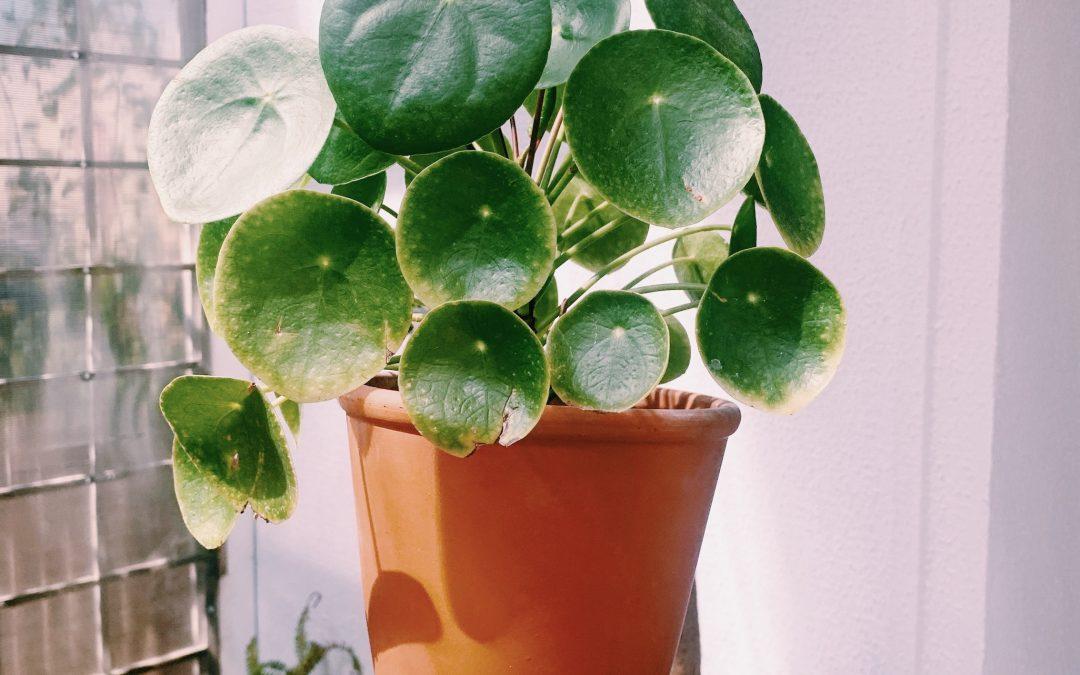 Top 5 al plantelor mele preferate de-acasă